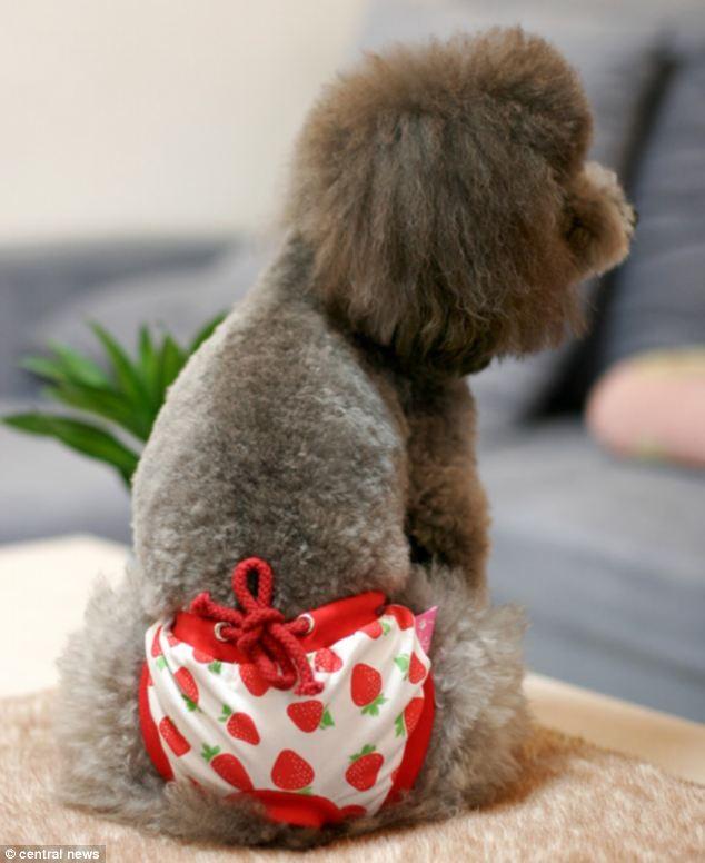 Canina Canina Petz Boutique Petit Petz Intima Intima Intima Petit Petit Boutique wPn0k8O