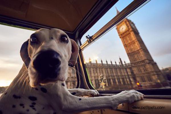 viajar con perros a londres