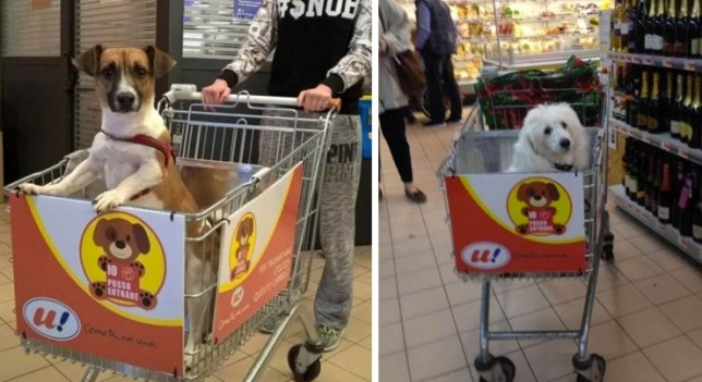 supermercado mercadona carrefour mascotas pienso boutique canina barf alimentaciòn compras dog friendly españa italia
