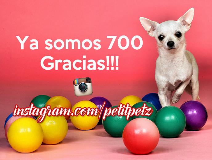 seguidores de instagram followers petitpetz perros chihuahuas yorkshire terrier moda canina mascotas