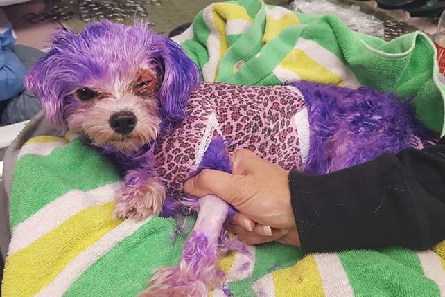 violet dog rescue in florida