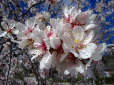 Frühlingsblüten als Symbol für Gewichtsreduktion mit Hypnose