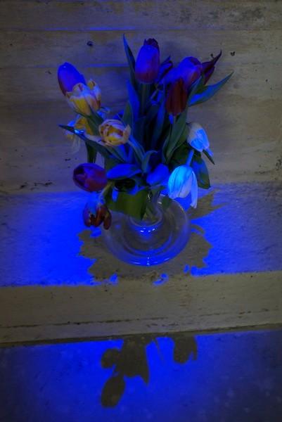 15 Tulpen für 15 KünstlerInnen