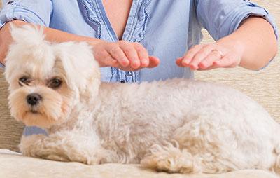soin reiki a distance pour chien