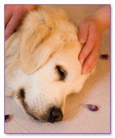 soin reiki pour chien