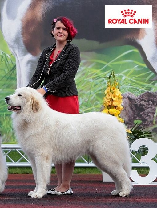 Echo de'Chien Conrad 4 years old. Photo Pille Saar