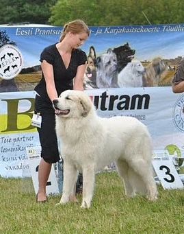 Chenespace Patron - BOB and BIS 2 in Estonian Specialty 2011 judged by Alain Pecoult, France. Photo Tiina Haak