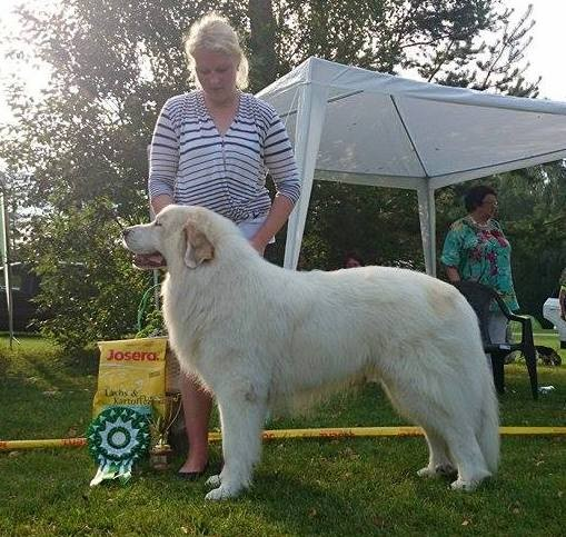 Echo de'Chien Aslan Warrior - BEST IN SHOW IV in Võru National show, judged by John Muldoon, Ireland. Photo Kalvar Silde