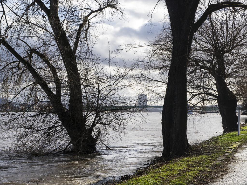 Uferweg linksrheinisch bei Hochwasser