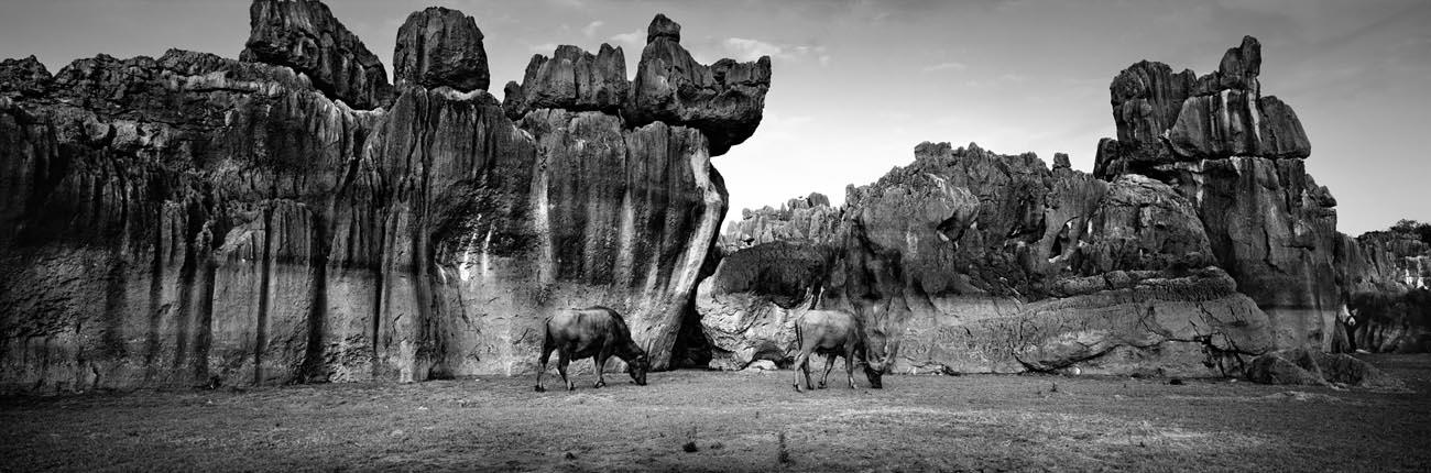 Zeng Nian,La forêt de pierres (shilin). Province du Yunnan, Chine. Mai 2010. Tirage jet d'encre sur papier INNOVA Exhibition Photo Baryta 310 gsm, 128.6X42.5cm / 02/15