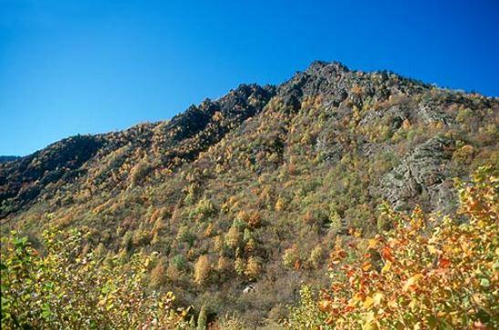 Avellaners: A mitja altura de la vall, trobem un bosc caducifoli molt esclarissat format per Roures i Bedolls, amb un sotabosc molt dens d'avellaners. En primer pla, uns avellaners amb