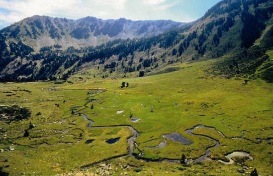 Clots de la Rialba: Per sobre de l'estrat arbori, hi trobem els prats d'altura i les molleres. Les molleres tenen el seu origen en els llacs glacials colmatats de llims i matèria orgànica. Es un ecosistema considerat com a prioritari per a la conservació