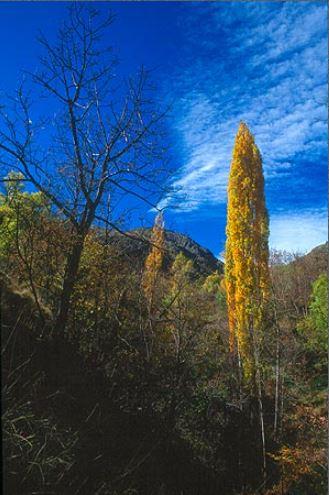 Bosc de ribera: Prop dels rierols, creixen frondosos boscos de ribera, amb pollancredes i freixenedes que omplen de color aquest racó del Pirineu.