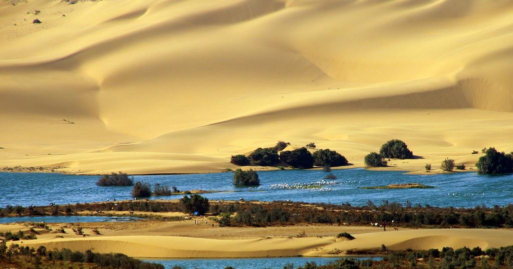 dune à Laayoune, Sahara Marocain