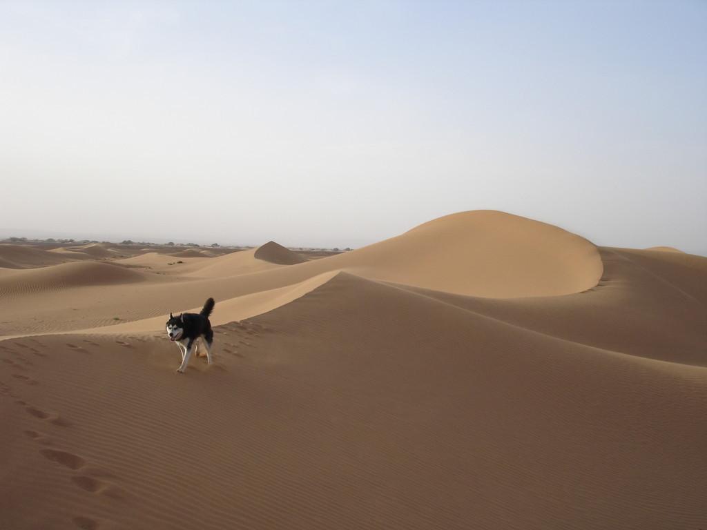 dunes dans l'erg chigaga, Maroc