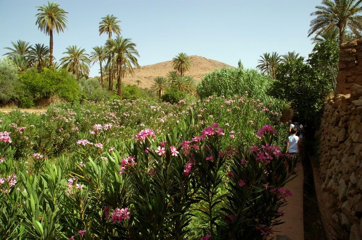 palmeraie d'Iche, Maroc