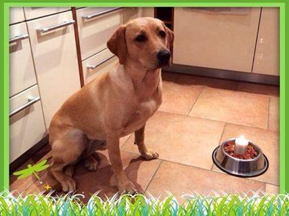 Annie feiert ihren 1. Geburtstag (16.April 2014)