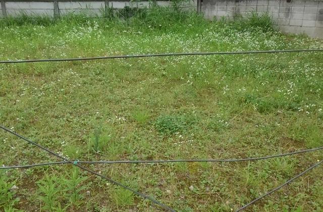 広範囲で雑草対策が必要な場所