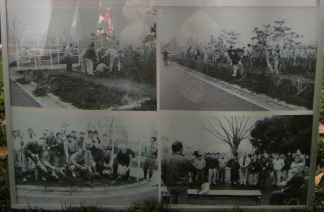 1984年、平塚市園芸協会花き部会バラ部会が、総合公園北側にバラの花壇を造園して市に寄贈(2017年4月29日 第44回平塚市緑化まつり「花の家」展示より(農水産課の許可を得て掲載)
