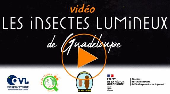Insectes lumineux en Guadeloupe - Présentation vidéo