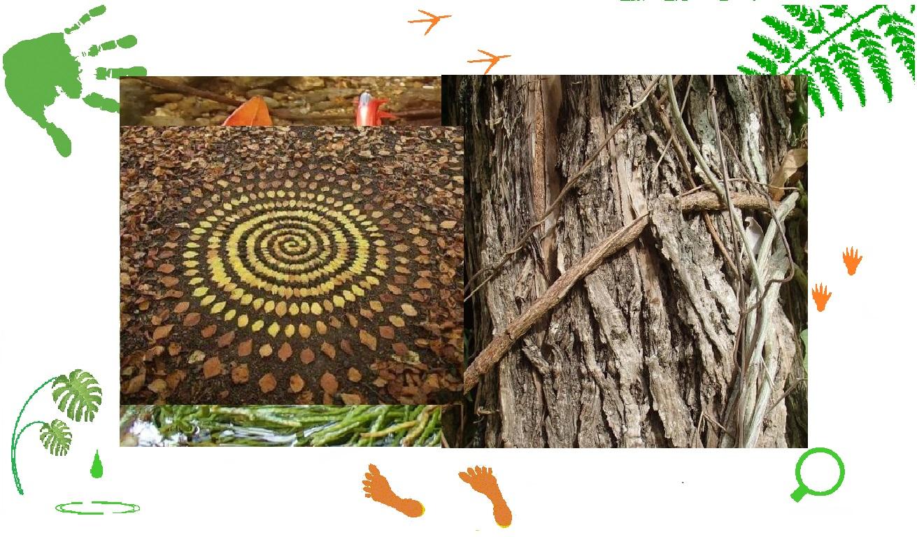 Bain de forêt et Land'art - Matouba -25 juill 2021