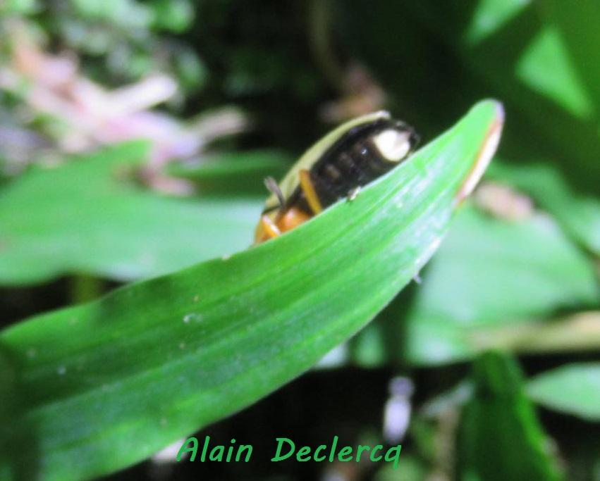 Luciole, tac-tac : où se cachent les insectes lumineux? Bilan de vos obs!