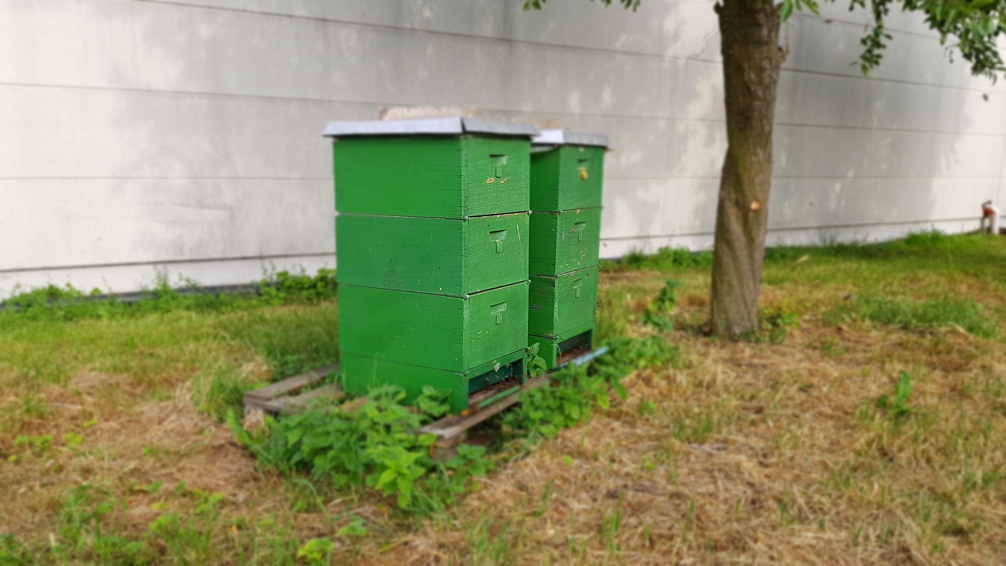 Bienenvölker im Weingut