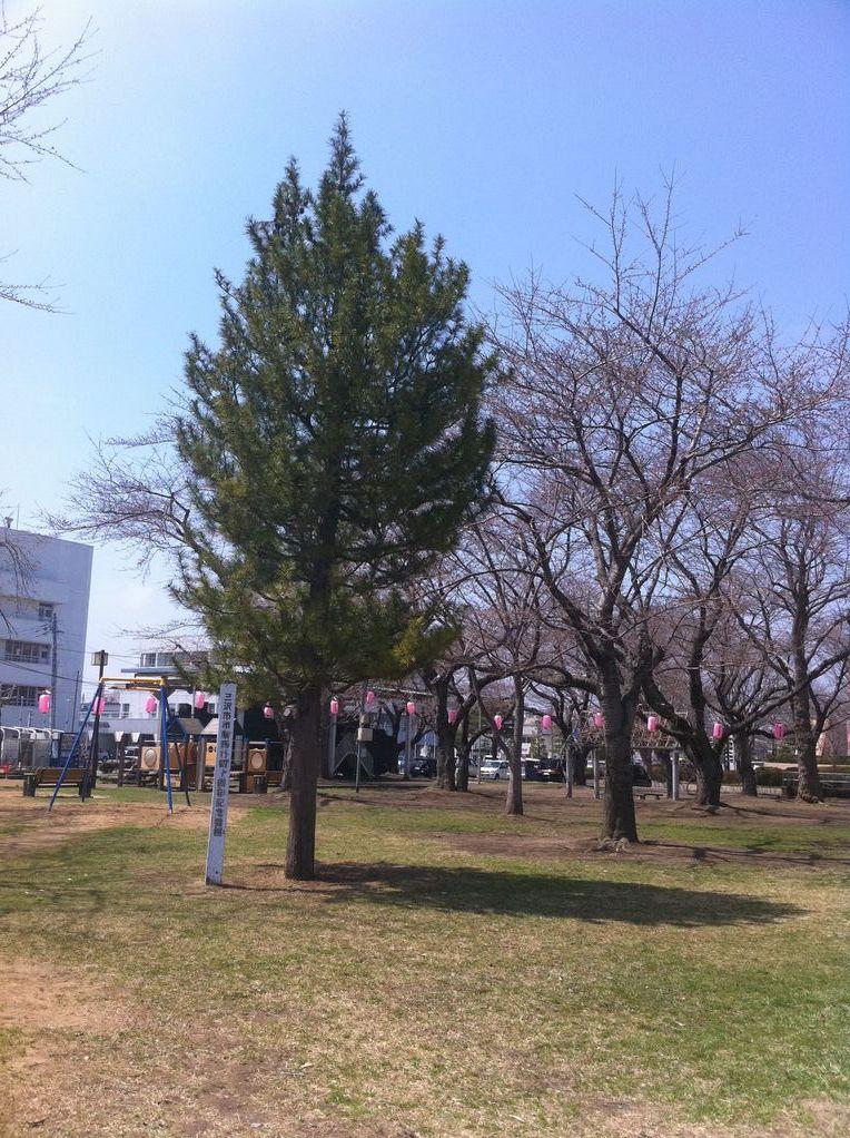 三沢もすっかり春めいています。
