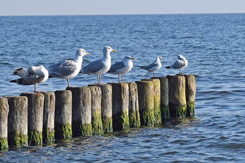 Usedom - Trubel und Abgeschiedenheit auf der Sonneninsel in der Ostsee