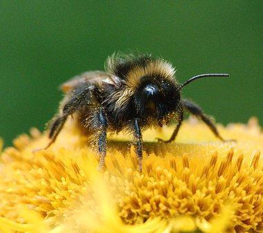 Helfen Sie mit, damit die Bienen überleben!