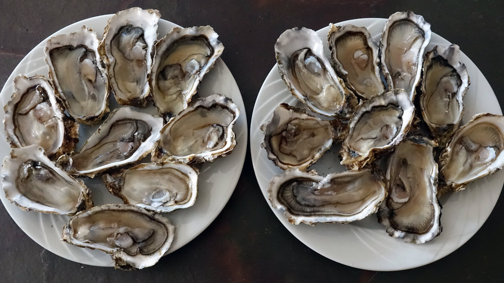 Quelques huîtres en attente de dégustation à Chailles