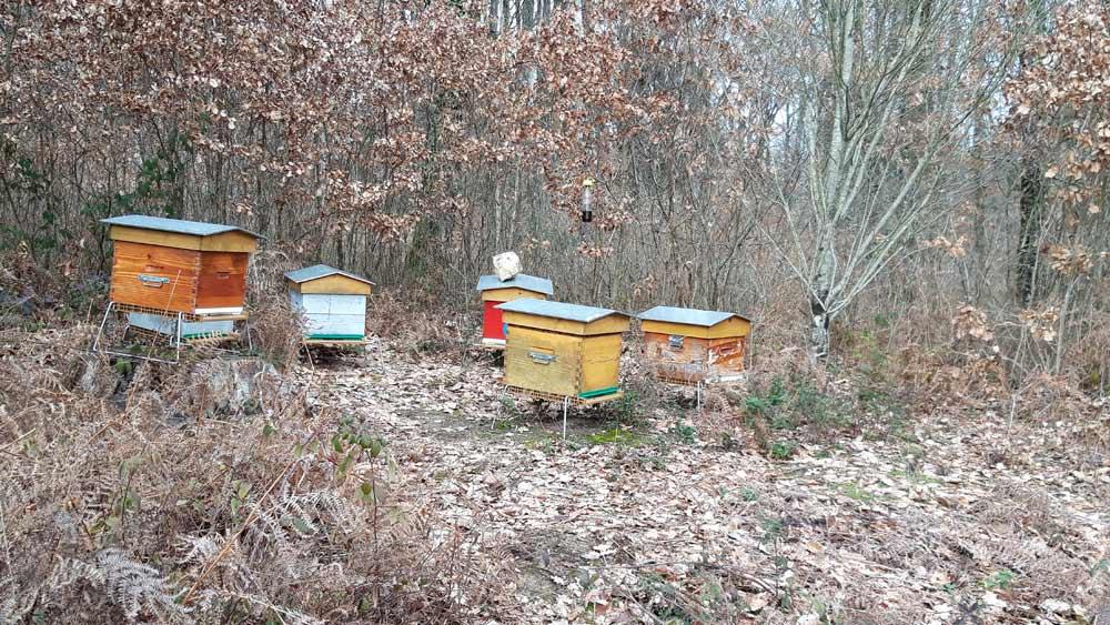 En se promenant dans le parc de 70 ha, des ruches ...
