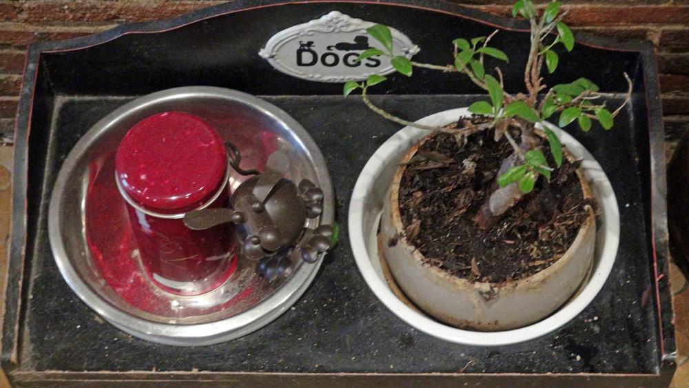Les cendres de Vatel, le chien emblématique des Petits Ventres
