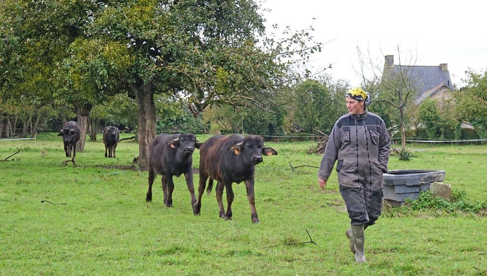 """Fanny Bertrand revient avec ses jeunes bufflonnes, dont une s'appelle """"Pirouette"""""""