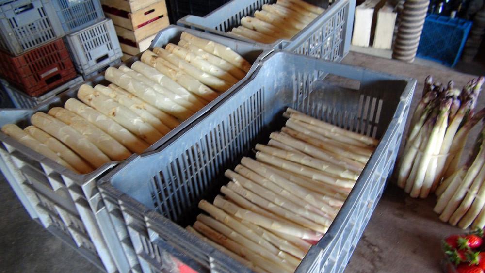 Les asperges proposées à la vente