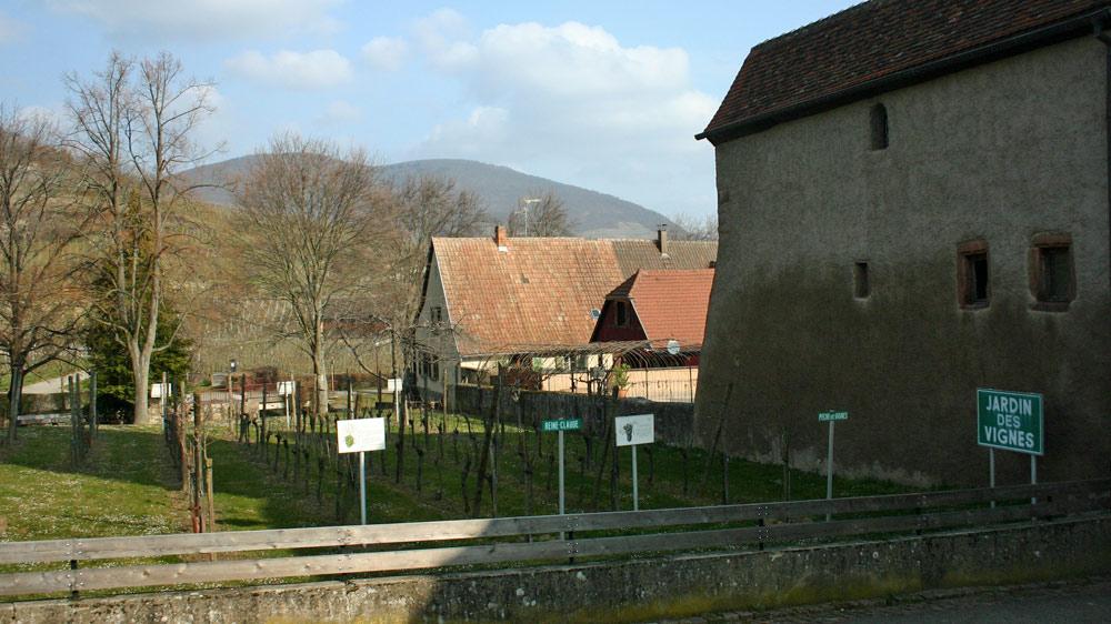 Ammerschwihr côté ouest - Le Jardin des Vignes