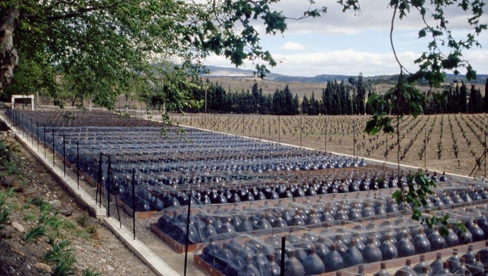 Dames-jeannes de 60 litres pour le vieillissement des Maury oxydatifs du Mas Amiel - 11 avril 1190