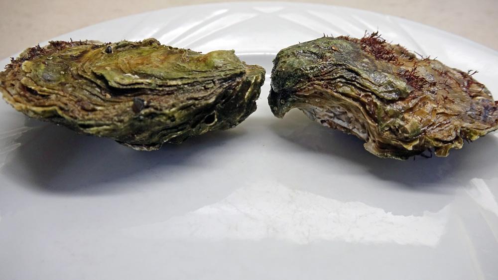 """Huîtres """"naturelles"""" fermées à talon plongeant vers le bas (sans le fameux bec)"""