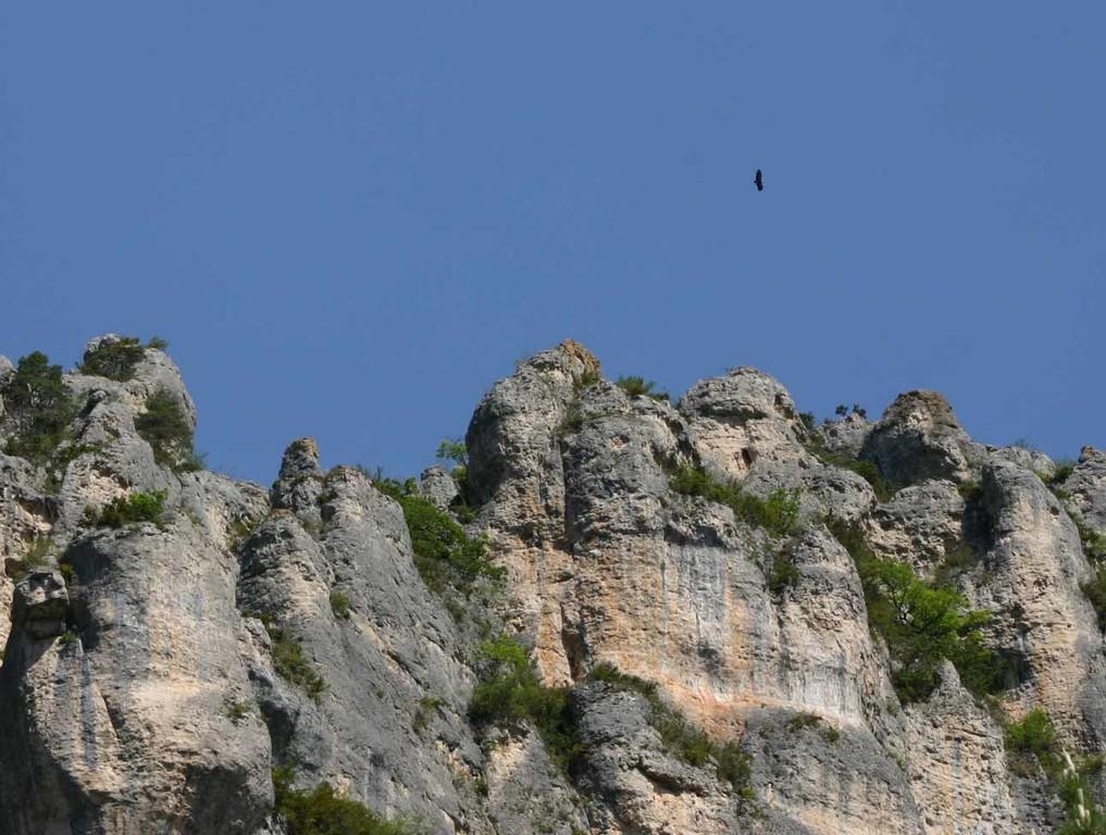 Le belvédère des vautours