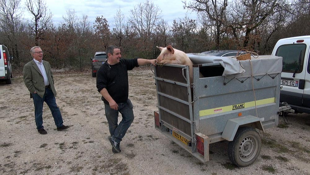 Le cochon s'impatiente !