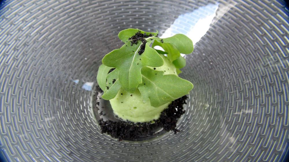 Sorbet roquette et poudre d'olives noires séchées