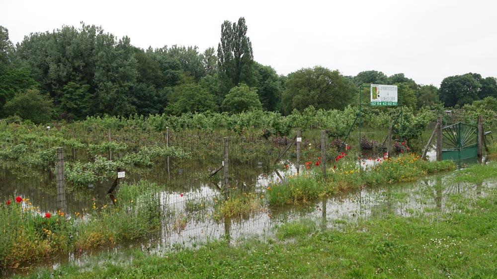 La société d'horticulture dans le bas de Chailles