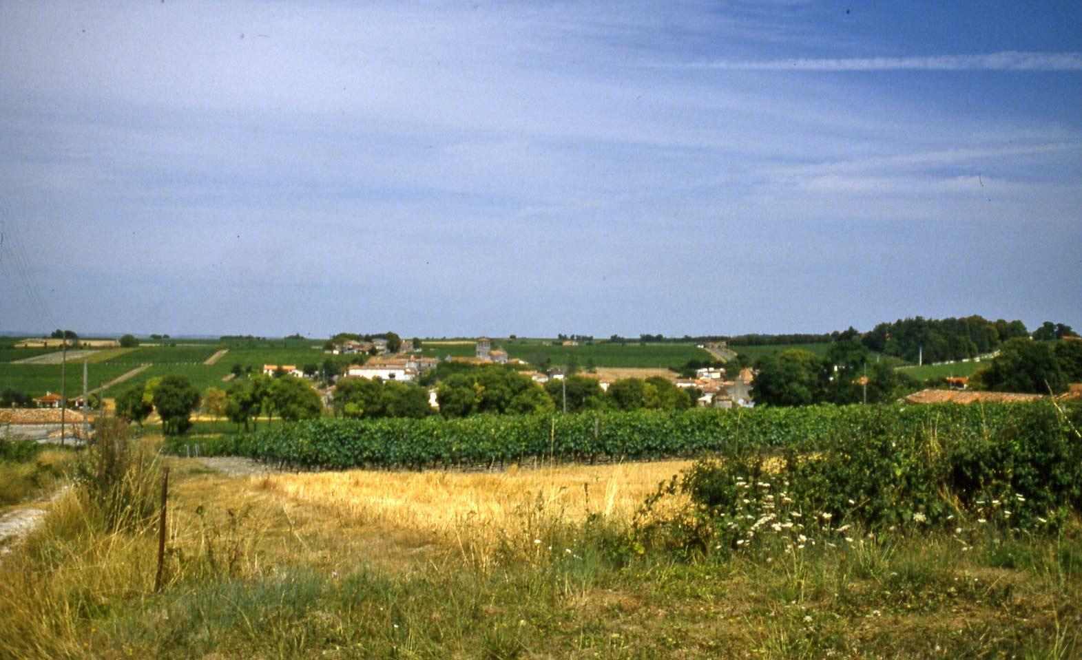 Le vignoble de La Pouyade ... en août 1986