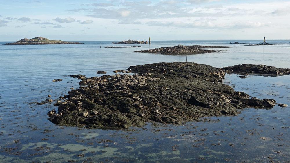 La côte à marée basse