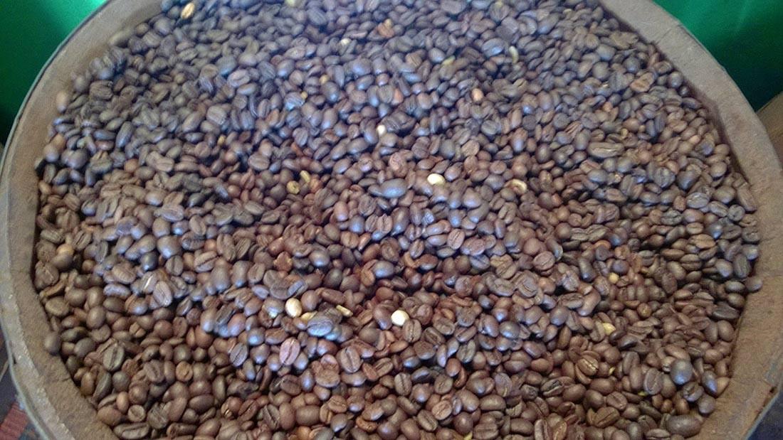 Café Arabica en grains