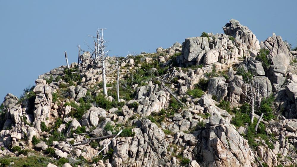A proximité des Aiguilles de Bavella, la végétation reprend le dessus après des incendies