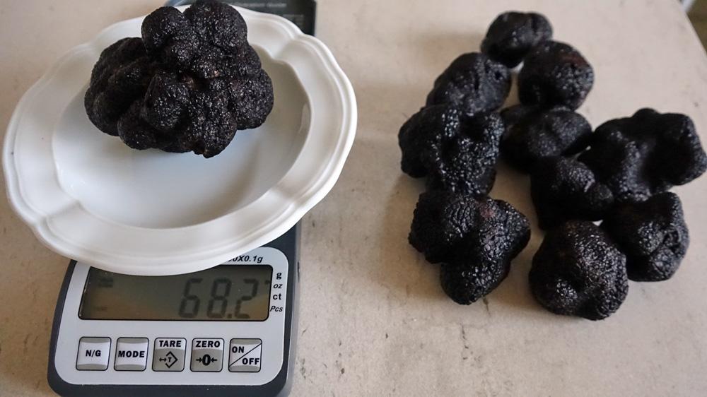 Une truffe de 68,2 g et les autres