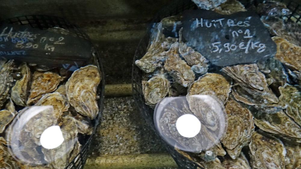 Huîtres en vente en vivier
