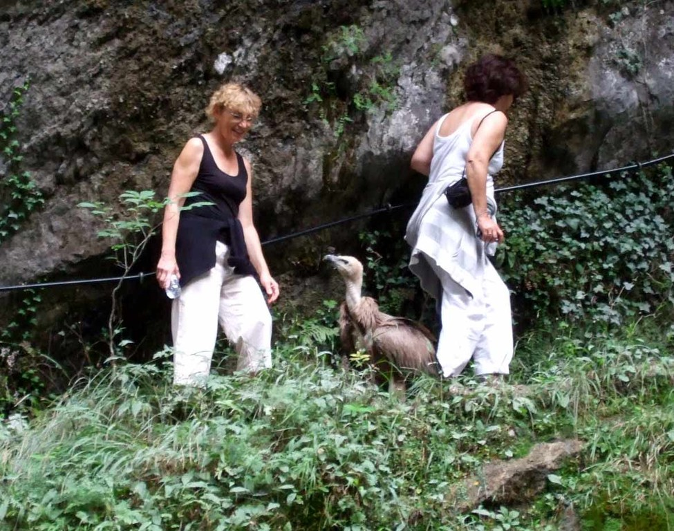 Kakuetta, Pascale et le vautour