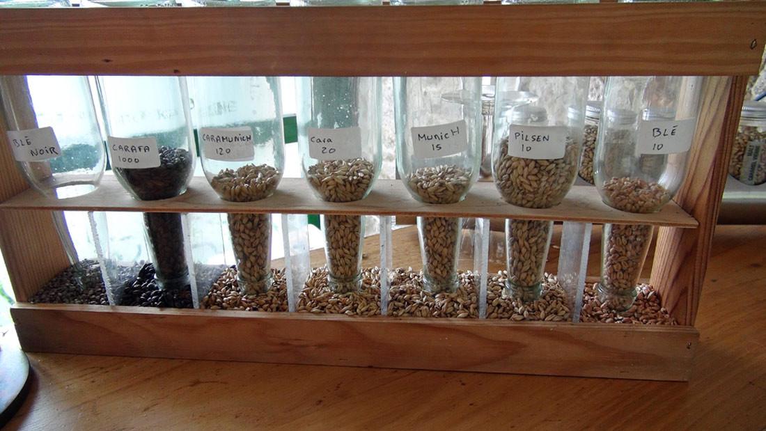 Les graines utilisées
